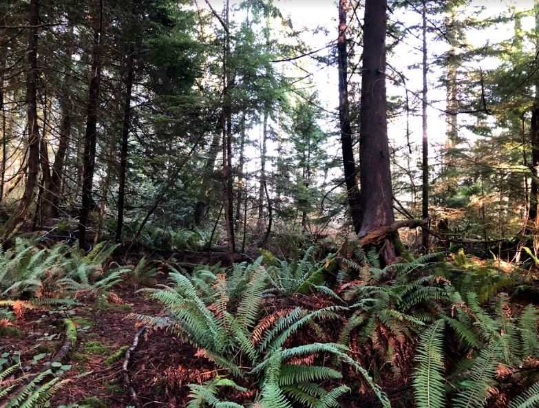 LOT A DL 871 BEST POINT - Indian River for sale(R2529388) - #17