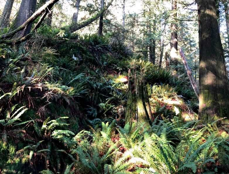 LOT A DL 871 BEST POINT - Indian River for sale(R2529388) - #9