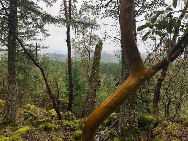LOT 1 MIXAL HEIGHTS ROAD - Pender Harbour Egmont for sale(R2553843)